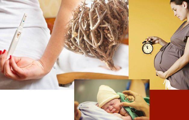 Meryem ana otu faydaları neler? Meryem ana otu doğum için kullanımı