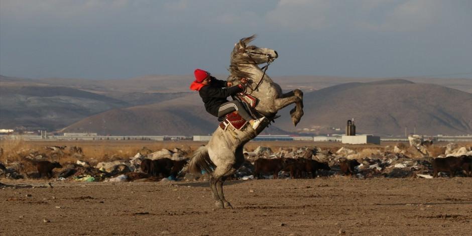 """Doğanın """"özgür atları"""" fotoğraf tutkunlarının yeni gözdesi"""