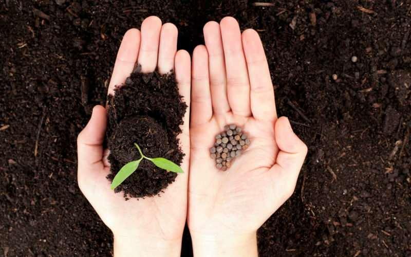 ata tohumu neden önemli