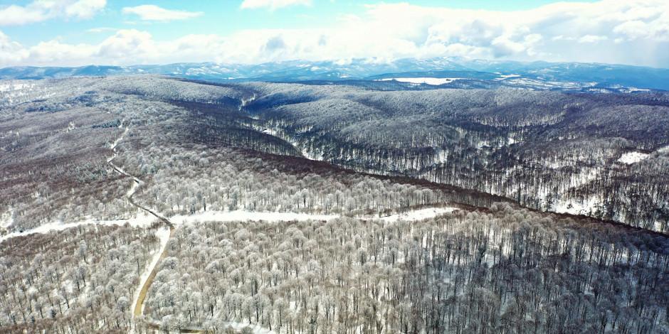 Karlı kayın ormanlarında doğayla iç içe tatil