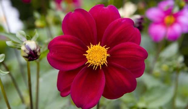 Rüyada çiçek görmek ne anlama gelir? Rüyada rengarenk çiçekler görmek neye işaret eder?