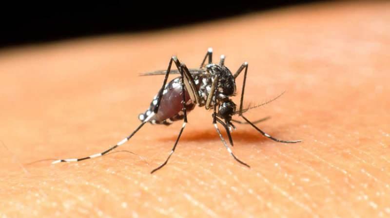 sivrisinek ısırmasıyla batı nil virüsü