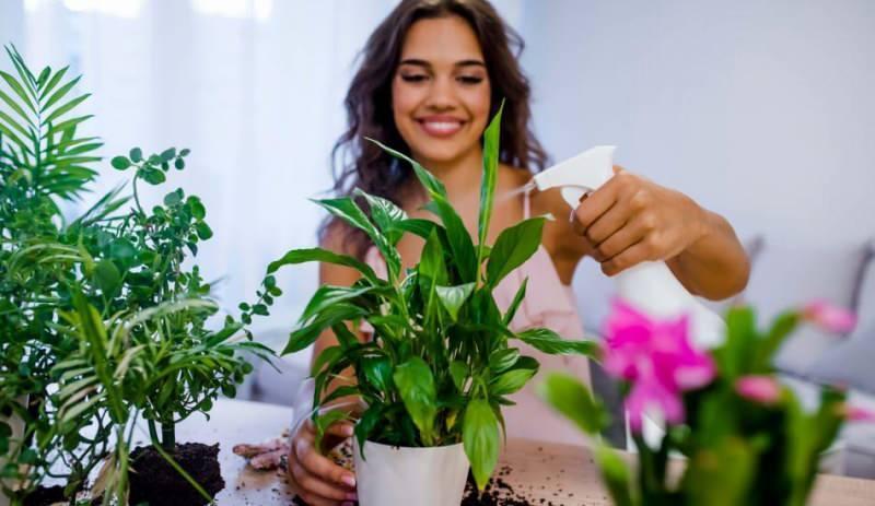 saksı çiçeklenmesini önlemenin yolları
