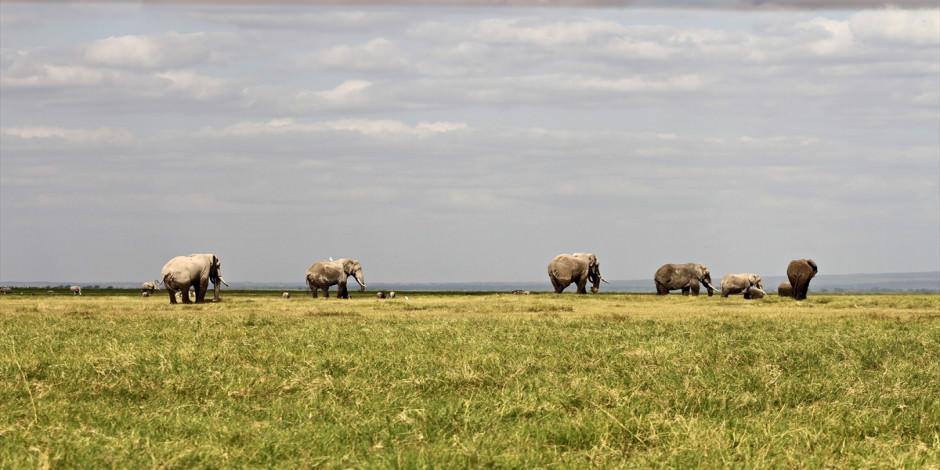 Afrika'nın en büyük doğal alanlarından Amboseli Milli Parkı