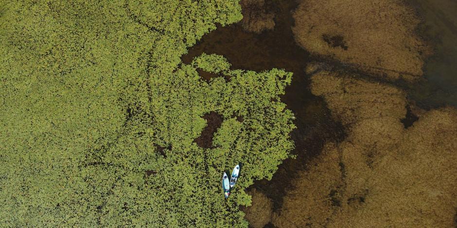 Beyşehir Gölü Milli Parkı'ndaki nilüfer bahçesi