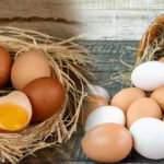 Organik yumurta nasıl ayırt edilir?
