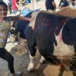 11 yaşındaki küçük kızın kurban pazarında sıkı pazarlığı