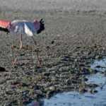 Dikkat çeken kuraklık uyarısı! Olağanüstü hal ilan edilmeli