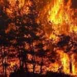 Ünlüler yangın için tek yürek oldu
