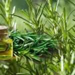 Biberiyenin yağı faydaları nelerdir? Biberiye çayı zayıflatır mı, nasıl demlenir?