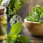 Nane yağının faydaları nelerdir? Nane yağı baş ağrısı için nasıl kullanılır?