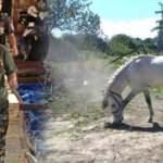4 bilezikle servet sahibi olmuştu! Hırsızlar atını çaldı