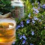 Biberiyenin yağı faydaları nelerdir? Biberiye çayı nasıl demlenir?