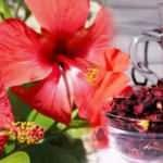 Hibiskus çayı faydaları nelerdir? Hibiskus çayı nasıl kullanılır?