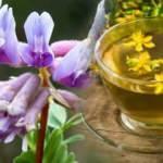 Çin geveni otu faydaları nelerdir? Çin geveni (astragalus) nasıl kullanılır?