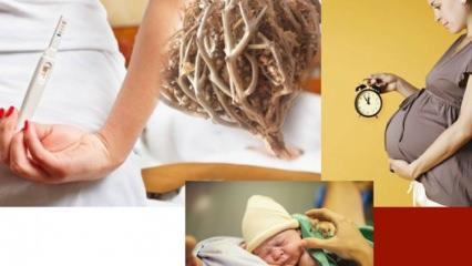 Meryem Ana otu hamilelikte nasıl kullanılır? Meryem Ana Otunun şaşırtıcı faydaları