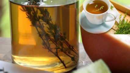 Kekik çayı zayıflatır mı? Kekik çayı ödeme ve şişkinliğe iyi gelir mi? Kekik çayı mucizesi...