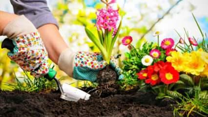 İlkbahar mevsiminde ekilecek olan çiçekler nelerdir? Bahar aylarında ekilecek bitkiler