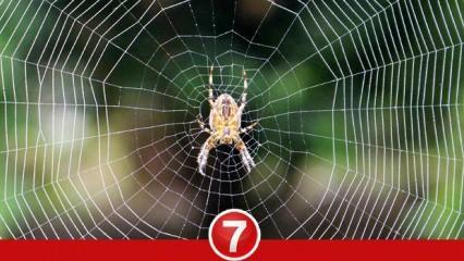 Rüyada örümcek görmek ne demek? Rüyada örümcek ısırması neye işarettir?