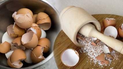 Yumurta kabuğunun faydaları nelerdir? Yumurta kabuğu nasıl kullanılır?