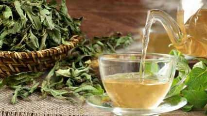 Melisa çayının faydaları nelerdir? Melisa çayı nasıl demlenir, hangi hastalıklara iyi gelir?