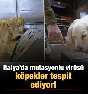 İtalya'da mutasyonlu virüsü köpekler tespit ediyor!
